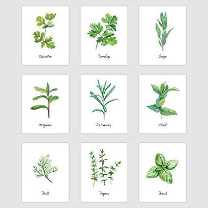 Palace Learning Kitchen Herb Botanical Prints.
