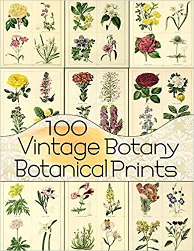 100 Vintage Botany Botanical Prints (Floral Ephemera Series): C.