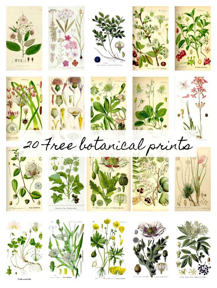 20 Free Botanical Prints and Easy DIY Wall Hanging.