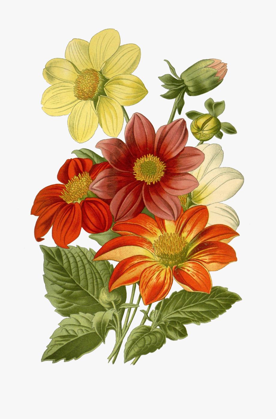 Botanical Drawing Flower Print Art.