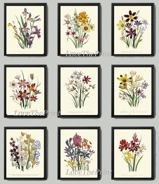 Antiqie Botanical Print SET of 9 Art Loudon Antique Beautiful Wildflower  Flowers Yellow Purple Green Summer Plant Nature Home Wall Decor.