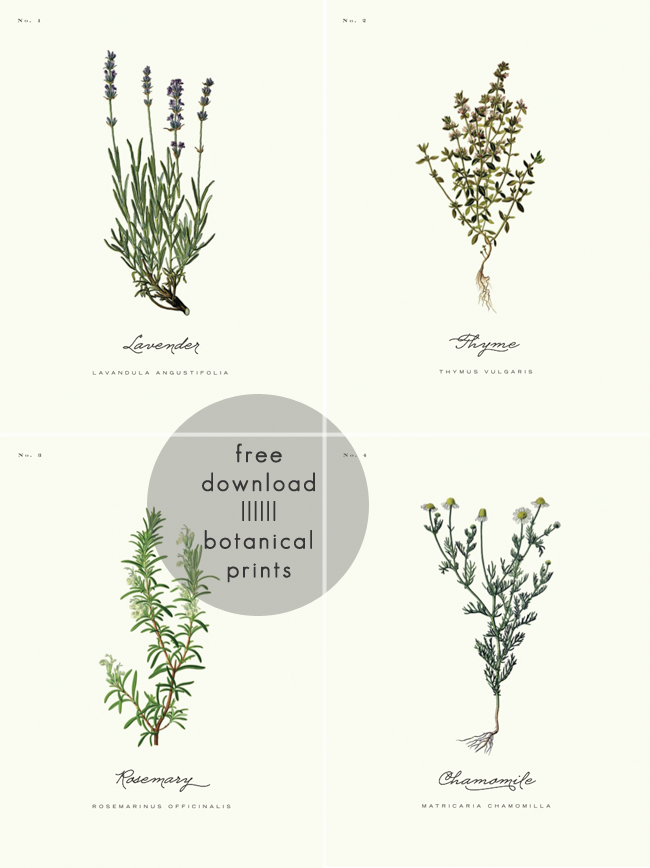 Farmhouse Style Botanical Prints Round.