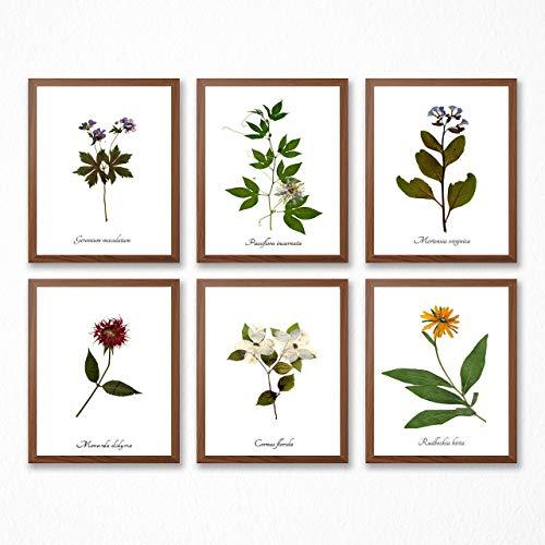 Amazon.com: Wildflower Botanical Print Collection.