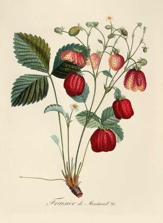 1000+ images about Fleurs & Botanique on Pinterest.