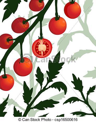 Clip Art Vecteur de tomate, plante, section, coupé, branche.
