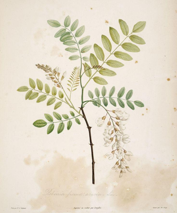 1000+ images about Botanical / Botanique on Pinterest.
