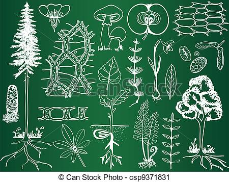 Botany Clip Art and Stock Illustrations. 70,138 Botany EPS.
