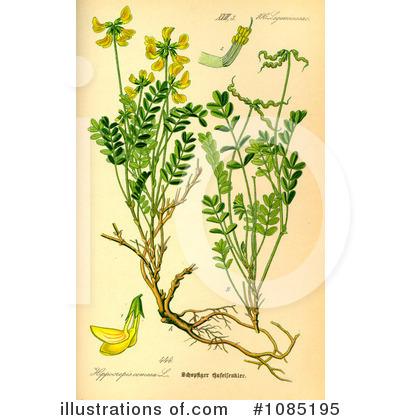 Botany Clipart #1085195.