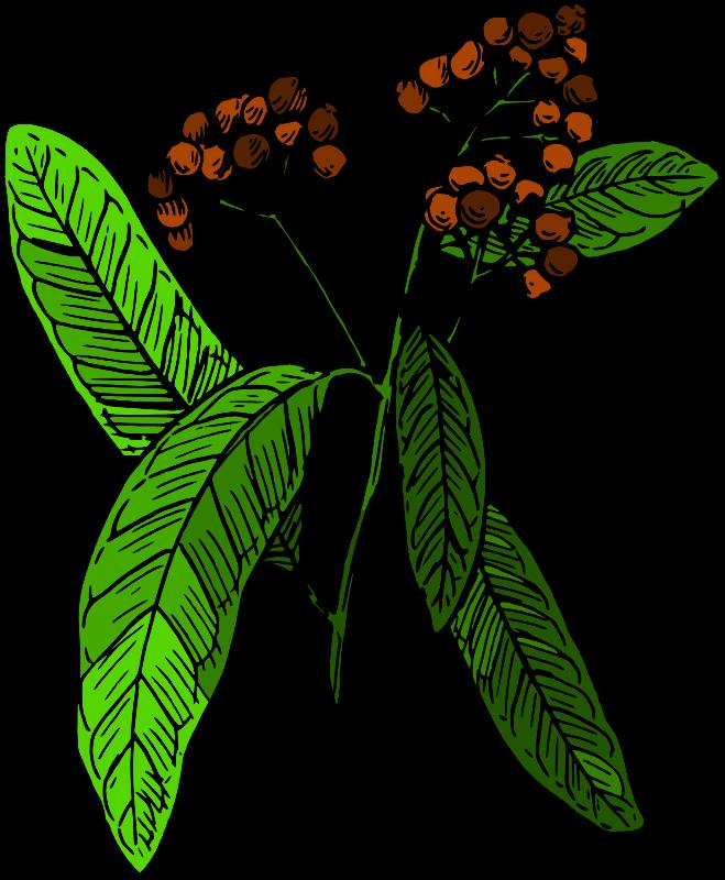 Botany clipart.