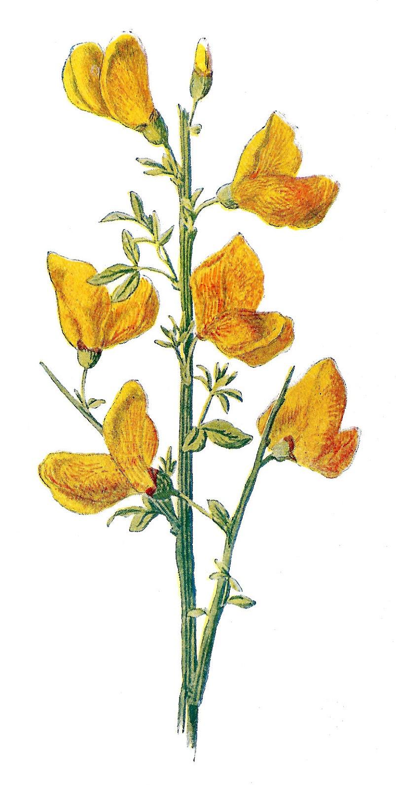 Flower Illustrations.