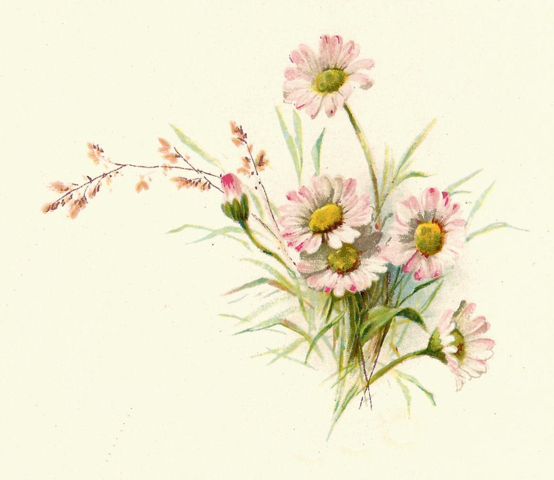 Botanical Drawings.