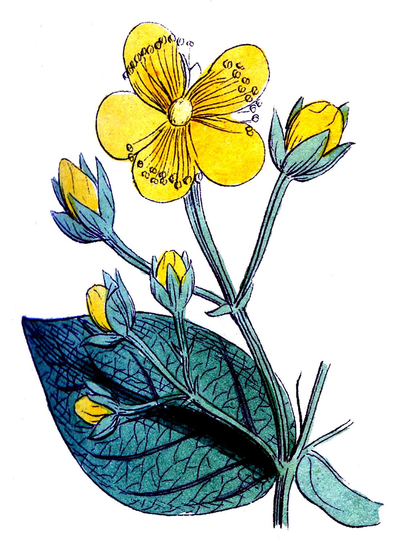 Vintage Botanical Images.