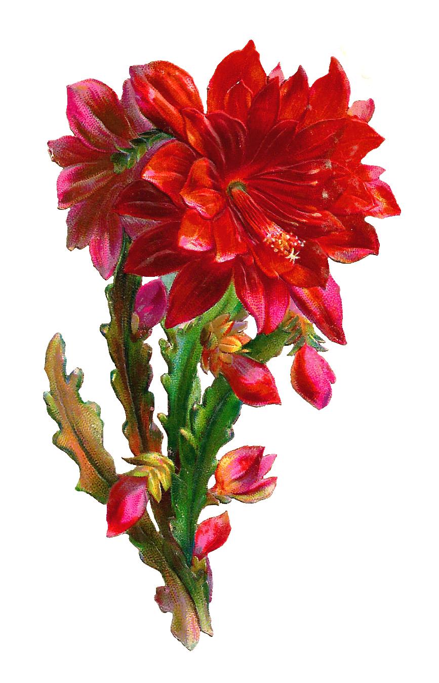 Graphic Art Flowers.