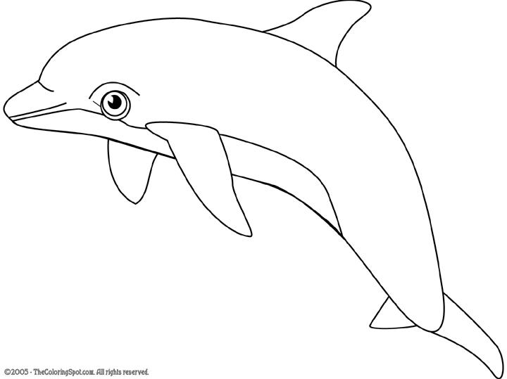 Bottlenose dolphin clipart.