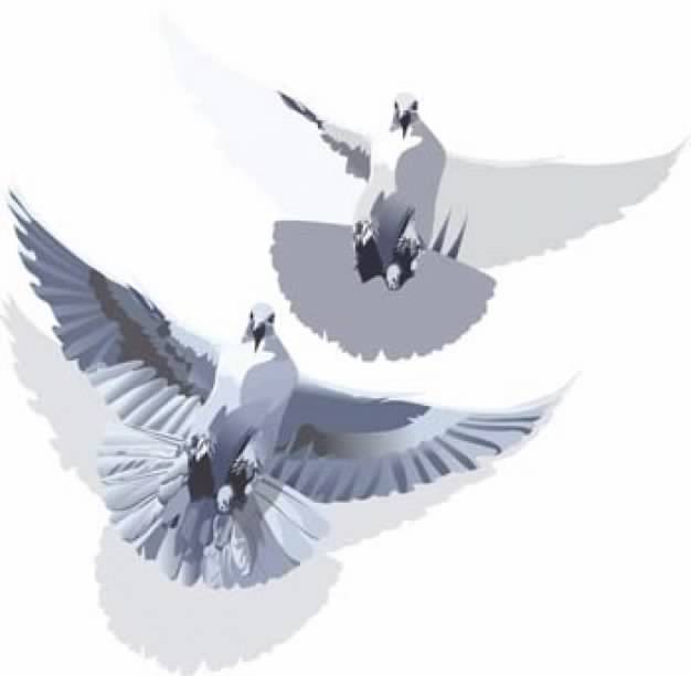 flying Pigeons clip art in bottom view.