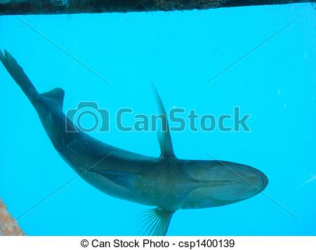 Stock Photographs of Fish Bottom View csp1400139.
