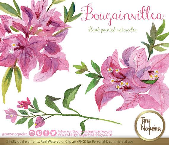 Bougainvillea flowers watercolor fuchsia hand drawn mexico clip.
