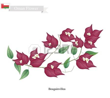 116 Bougainvillea Flower Cliparts, Stock Vector And Royalty Free.