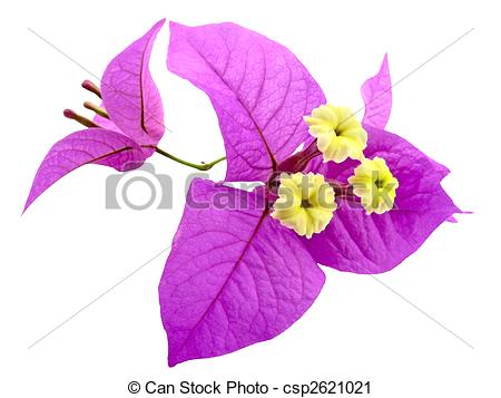 Stock Photography of Santa Ritas Flowers.
