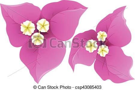 Vector Clipart of Bougainvillea in pink color illustration.