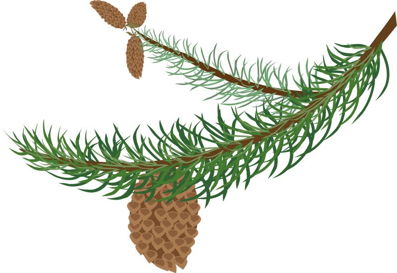Pine Bough Clipart.
