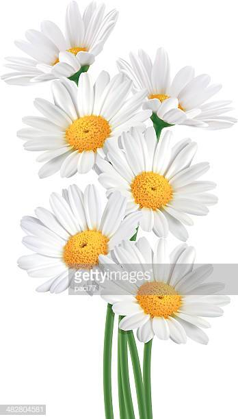 30 Top Daisy Stock Illustrations, Clip art, Cartoons, & Icons.