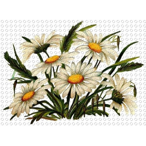 Free Daisy Images, Download Free Clip Art, Free Clip Art on Clipart.