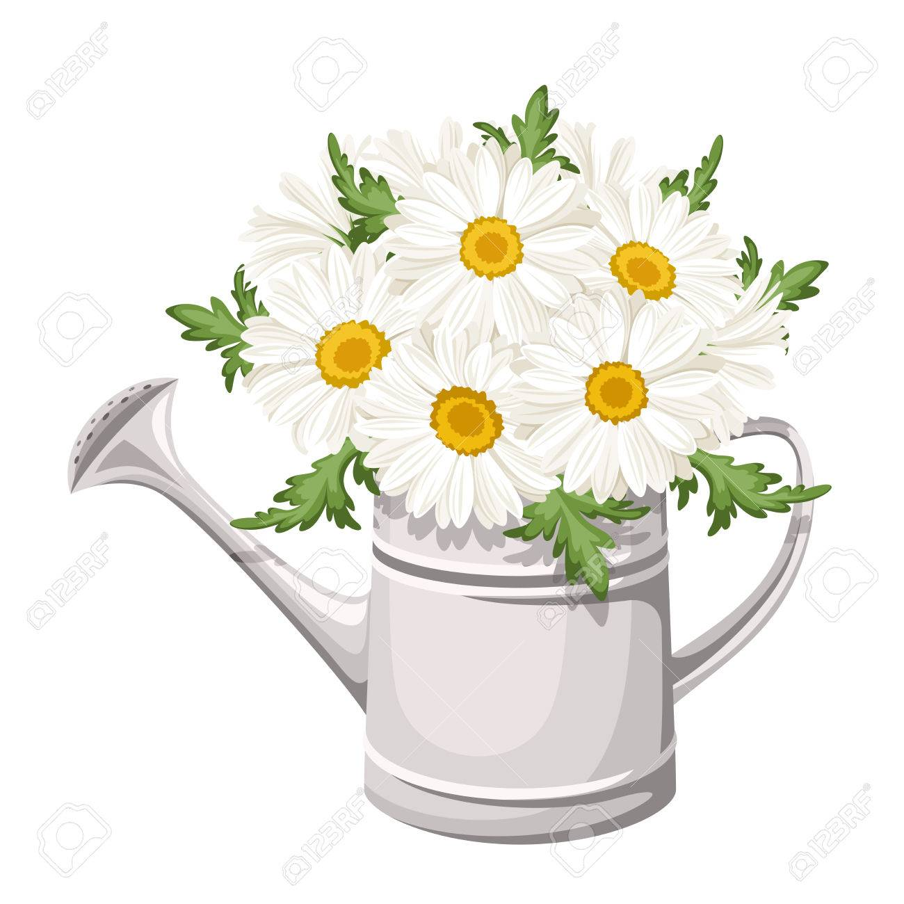 Bouquet of daisies in watering can Vector illustration.