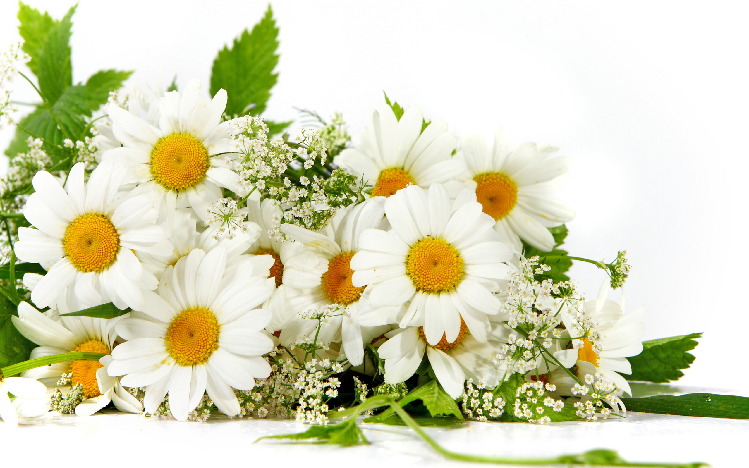 Bouquet of daisies wallpapers and images.