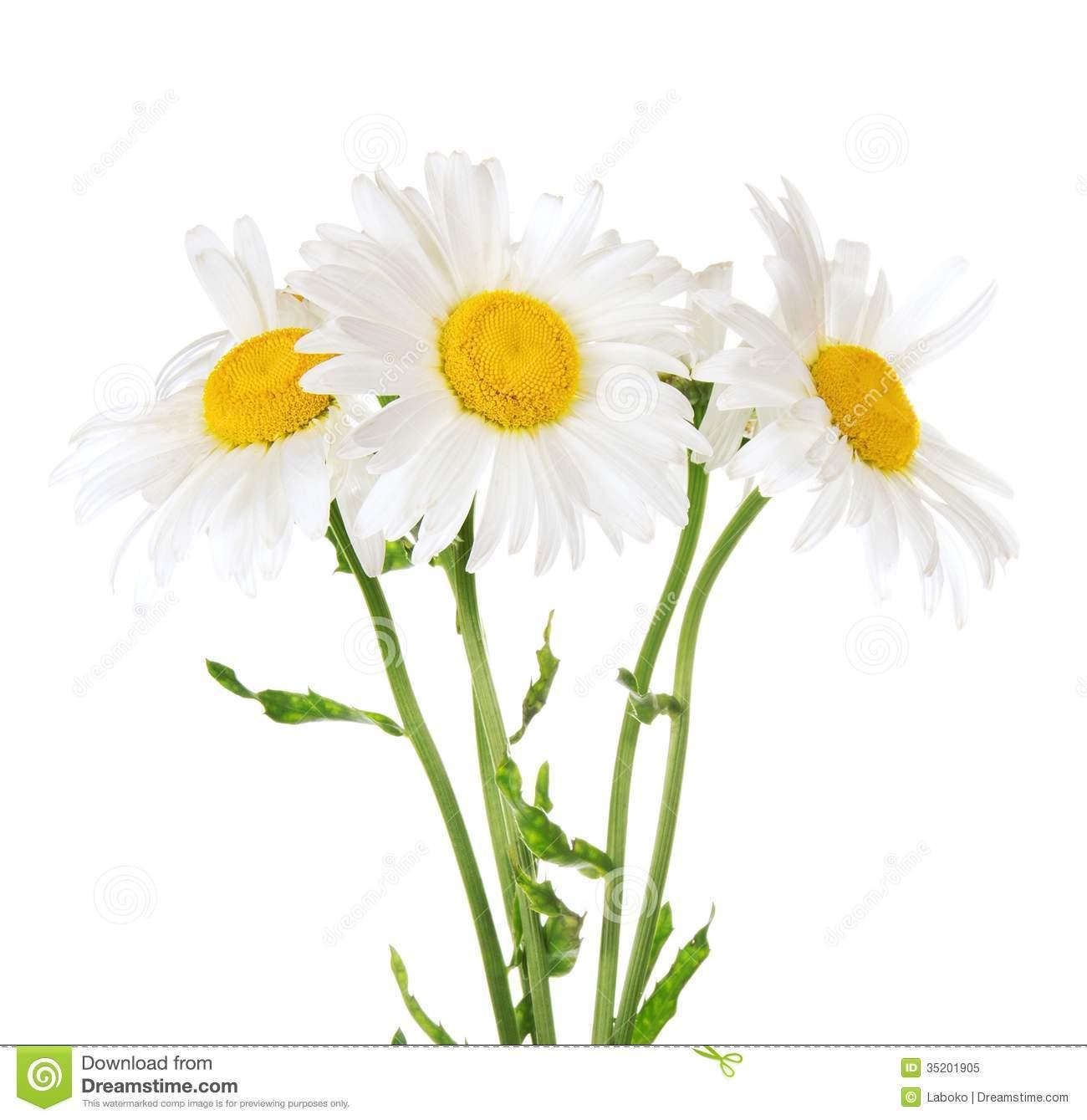 Daisy bouquet clipart » Clipart Portal.