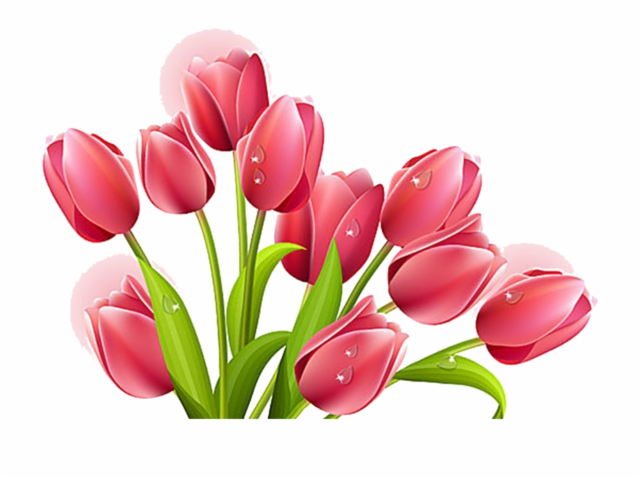 Clip Free Stock Tulip Flower Bouquet Clip Art Transprent.