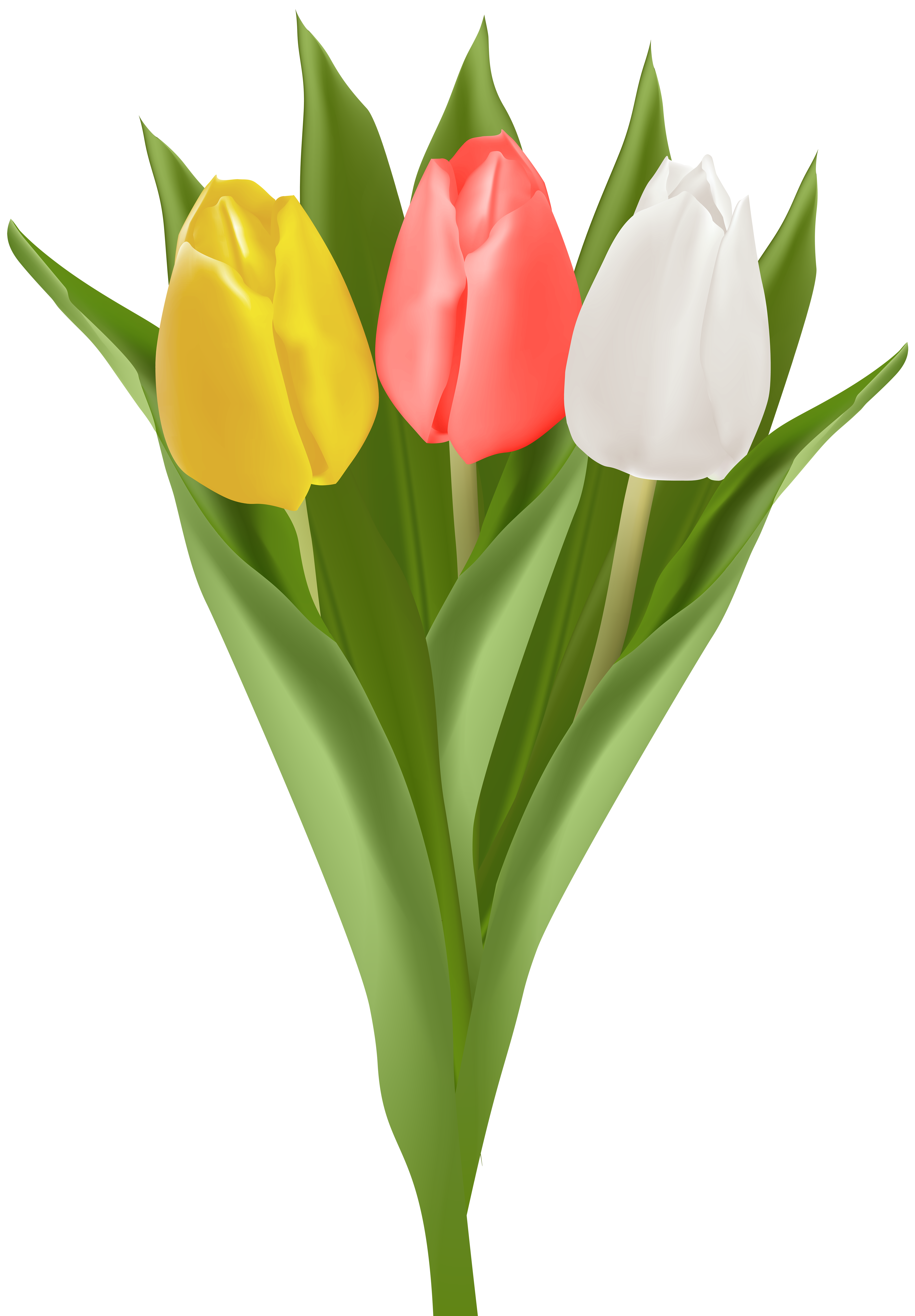 Bouquet with Tulips Clip Art Image.