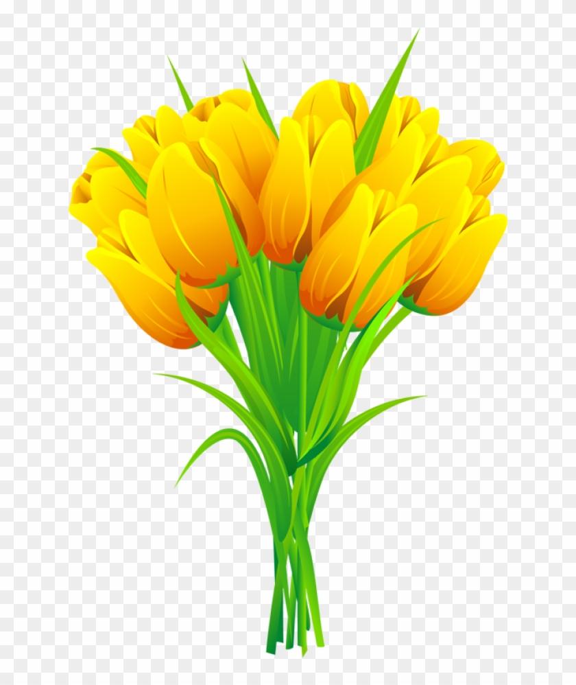 Tulip Flower Free Png Transparent Images Free Download.