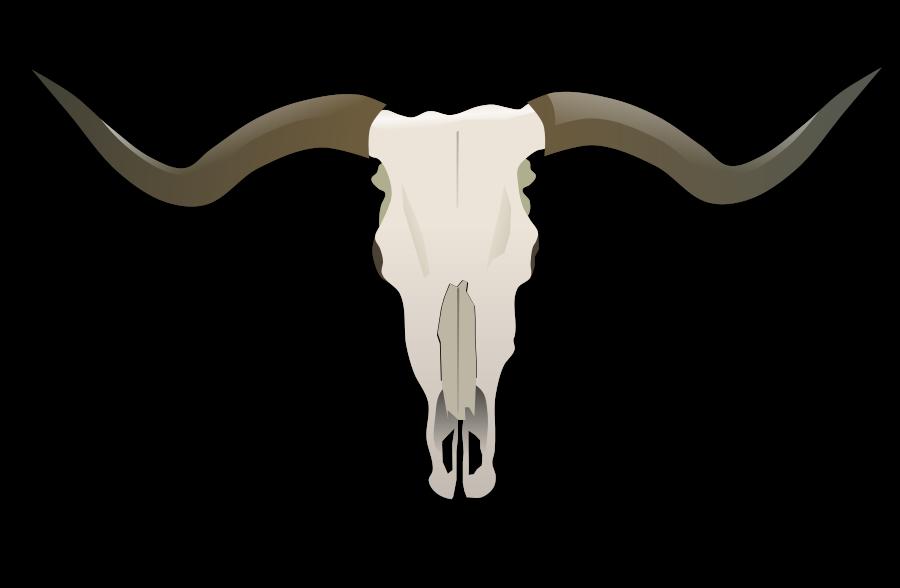 Images Skull.
