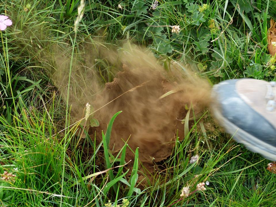 Free photo Bovist Dust Mountain Shoe Mushroom Spores Crush.