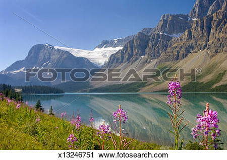 Stock Photography of Flowers in front of Bow Lake and mountains.