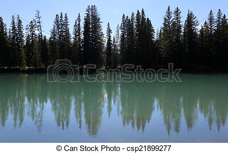 Picture of Bow River Tree.