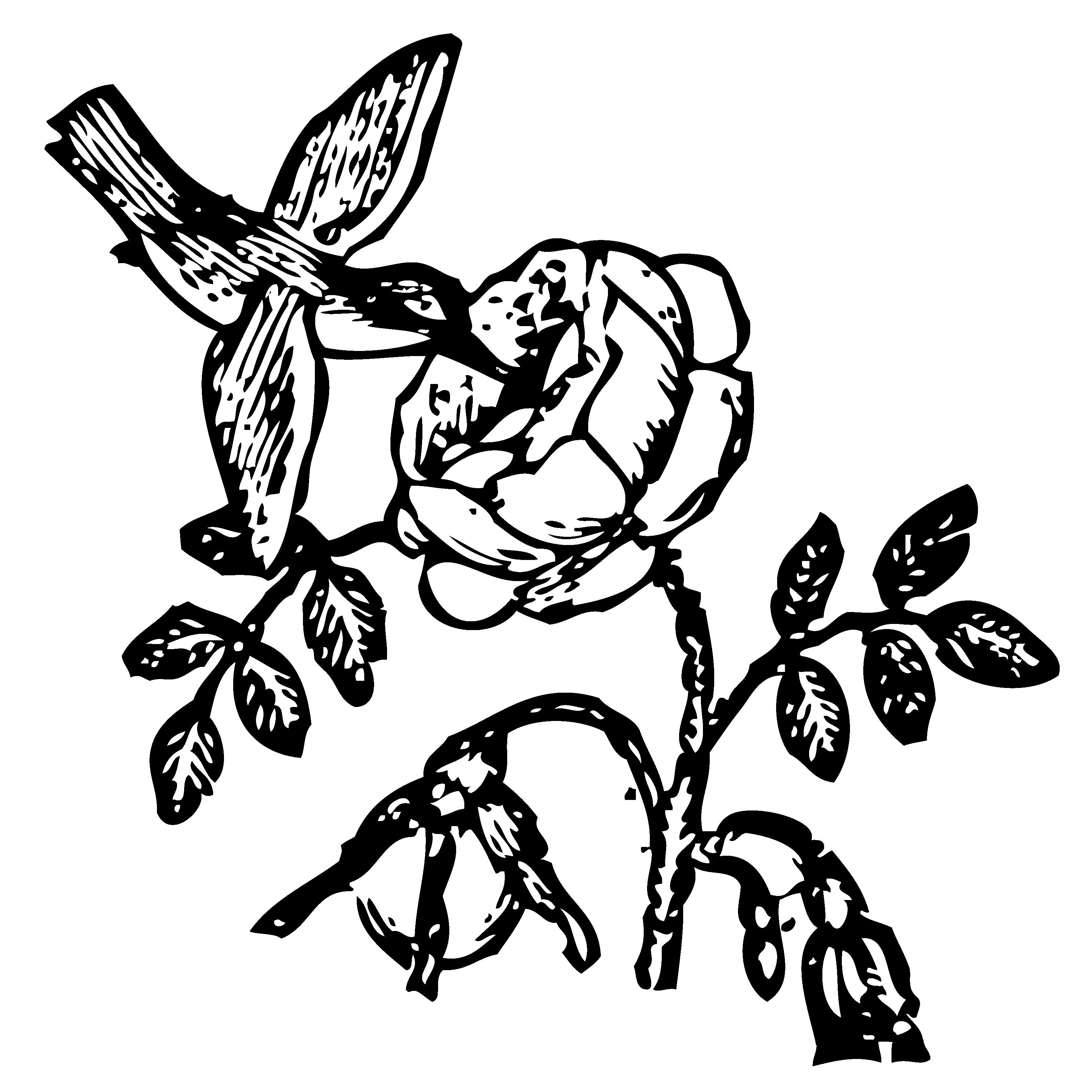 Bowen Mother Goose Hummingbird.