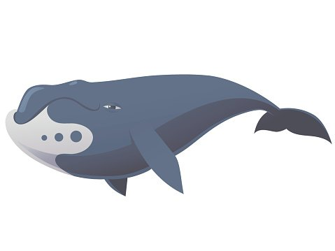 funny bowhead whale Clipart Image.