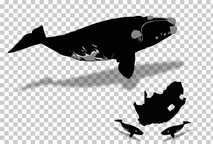 Dolphin Sperm whale Bowhead whale North Atlantic right whale.