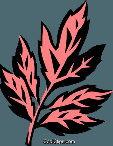box elder Royalty Free Vector Clip Art illustration.