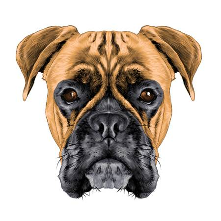 3,283 Boxer Dog Stock Vector Illustration And Royalty Free Boxer Dog.