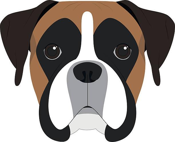Best Boxer Dog Illustrations, Royalty.