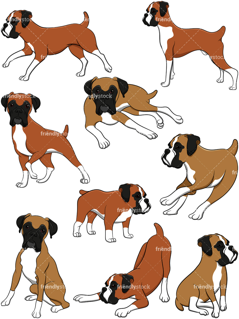 Boxer Dogs Collection #2.