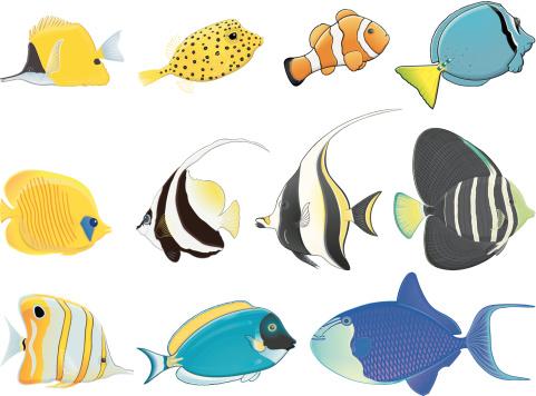 Yellow Boxfish Clip Art, Vector Images & Illustrations.