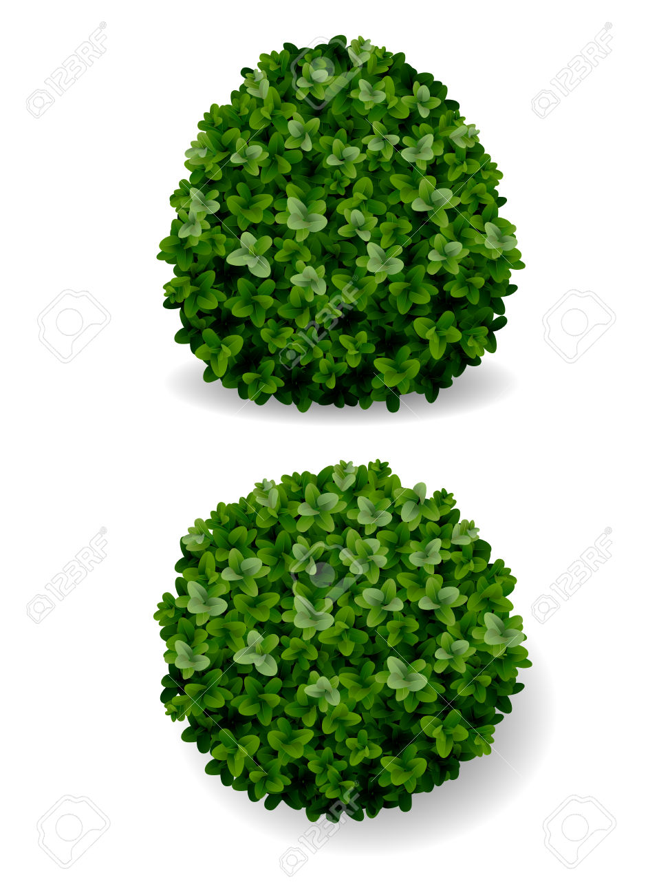 252 Boxwood Stock Illustrations, Cliparts And Royalty Free Boxwood.