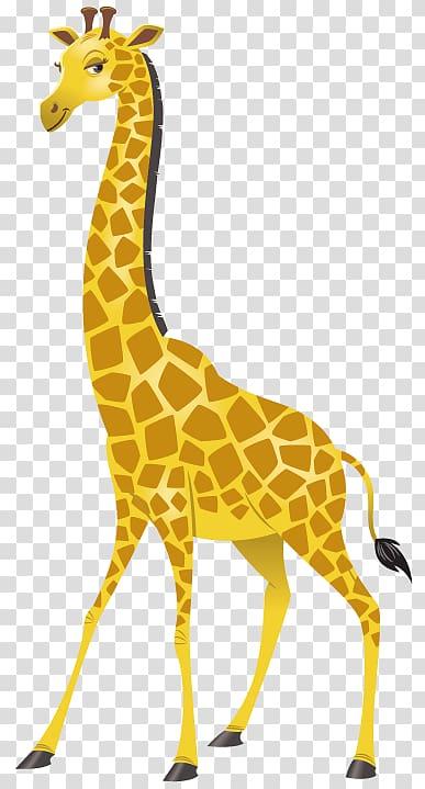 Giraffe Climber Boy Animal Neck Crocodile, giraffes.