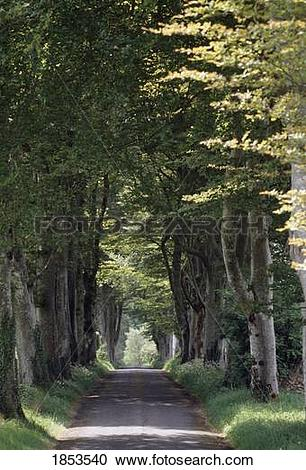 Stock Photography of Rural Road, Lough Key Forest Park, Boyle.
