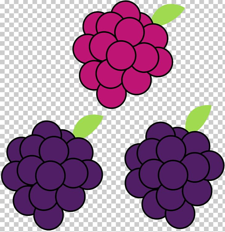Grape Boysenberry PNG, Clipart, Art, Berry, Blackberry.