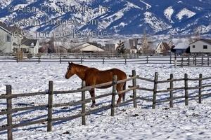 Stock Photo Of A Horse on a Farm in Bozeman, Montana.